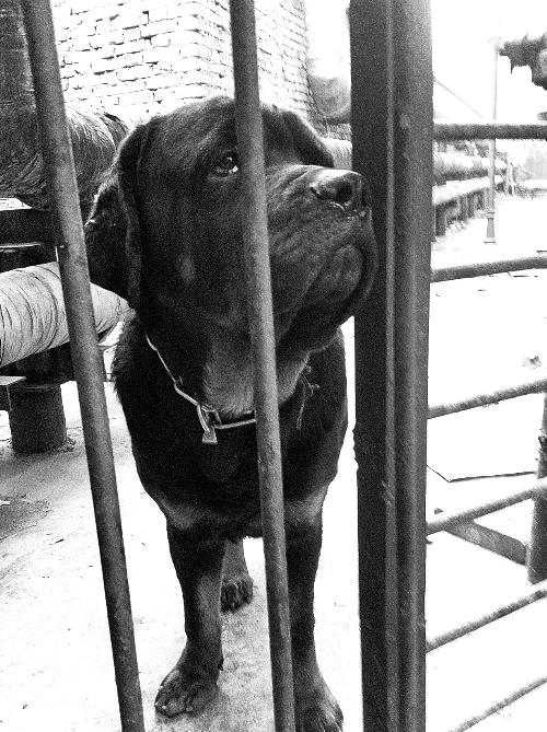 宠物协会流浪动物救助站