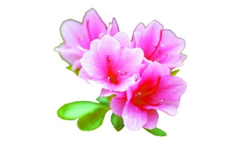 杨桃花的折法步骤图解