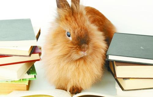 而且极其喜欢小动物,上了大学也不忘养只小兔兔