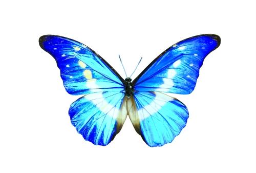 折蝴蝶大全步骤图解