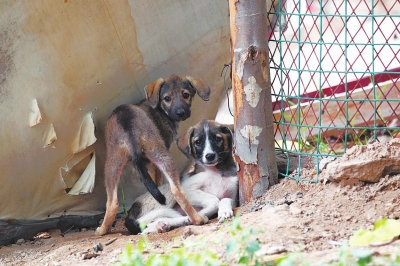 郑州流浪动物保护协会