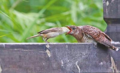 小鸟吃虫子简笔画