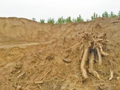 王米植物根部结构图