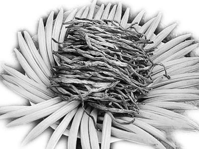 百合花纸步骤图解