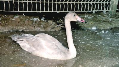 贺州红豆贺州论坛湿地公园的事业