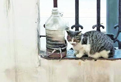 因养数十只猫邻居被熏难以入眠!猫主人正在积极寻找房源,其余业主表示理解