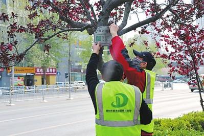 """郑州街头树木戴""""身份证"""""""