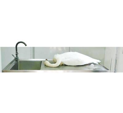 昨晚八点多,郑州网红天鹅妈妈去世