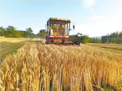 驻马店 3万台收割机大会战 1165万亩小麦正陆续归仓