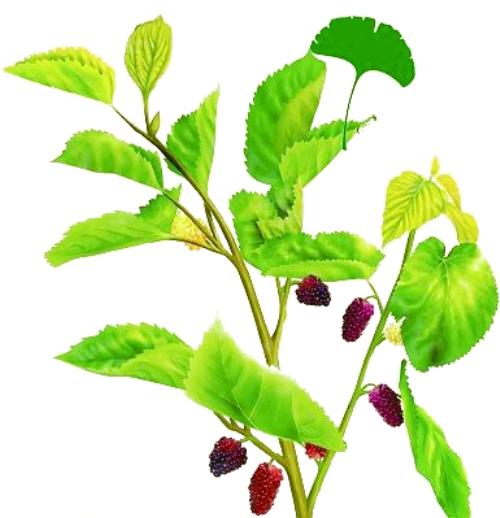 背景 壁纸 绿色 绿叶 树叶 植物 桌面 500_518