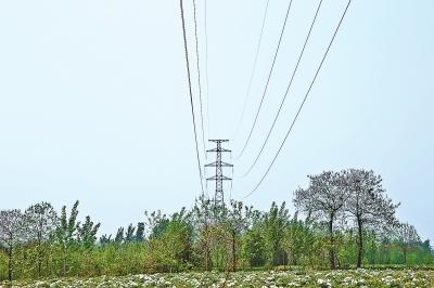 """就在10米外的高压线塔上,固定着提示牌:""""上方有22万伏高压电线,高压线"""