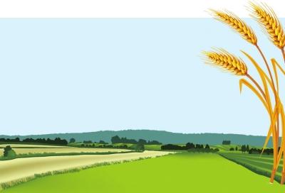 就可保证小麦一生正常生长和