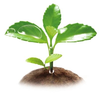 种子植物ppt百度文库