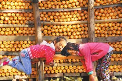 金秋十月,该县45万亩玉米喜获丰收.⑤3