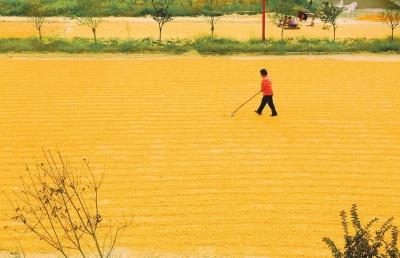 农民丰收画绘画步骤