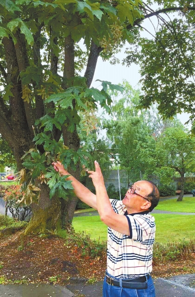 董云岚在观察古树生长情况.