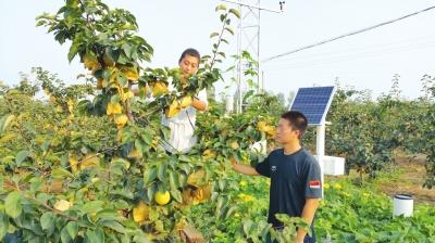 每一个梨的生长情况,对空气温度,湿度,梨树养分,授粉期等了如指掌.