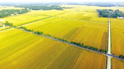 许昌县陈曹乡十万亩粮食高产示范区鸟瞰牛原摄