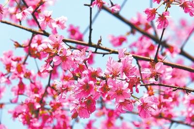 剪花朵大全步骤图解