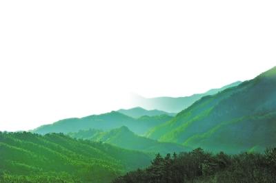 """十年""""绿""""出新河南——我省林业生态建设成就综述"""