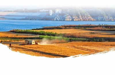 白沙水库灌区麦田风景