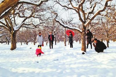 万亩梨园雪景如画