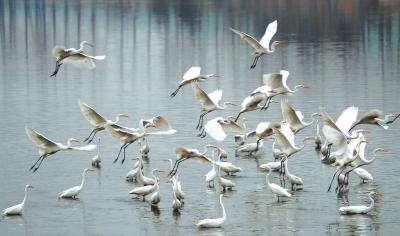 美好环境风景白鹭