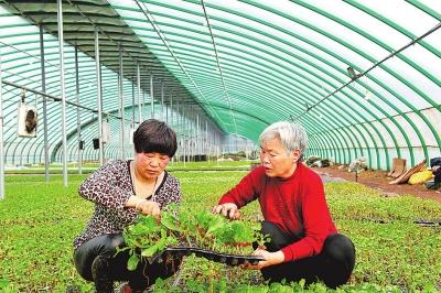 种苗基地为丰收和美好生活打基础