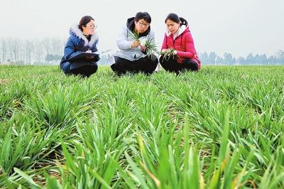 农技人员指导农户开展田间管理