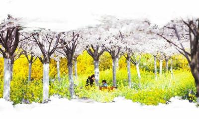 洛阳牡丹花会,开封菊花展,南阳月季展,鄢陵的蜡梅盆景和绿化苗木产业