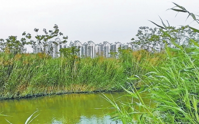 湿地萎缩 鸟失乐园