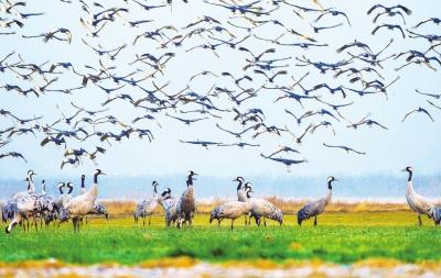 鸟的风景画面