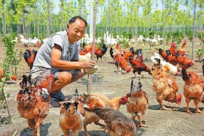 生态循环种养富农家