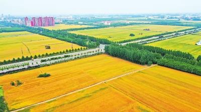 高標準農田建得好