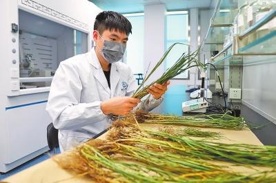 """河南郑州:土壤""""生病""""了也可送医"""