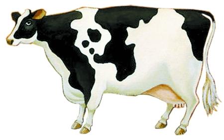 黑白牛手工制作步骤