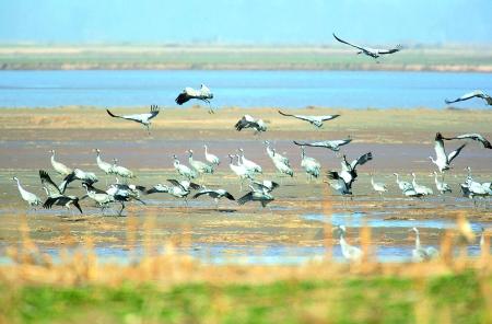 郑州黄河滩地生态旅游发展探讨
