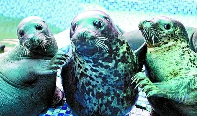郑州市动物园海洋馆内