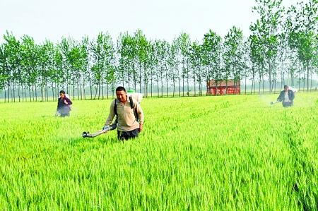 内乡县夏馆镇黄靳村农民正在用潜水泵抽水喷灌小麦