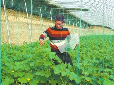 沈丘:设施农业效益不凡