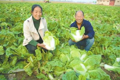 商水县特色种植促脱贫