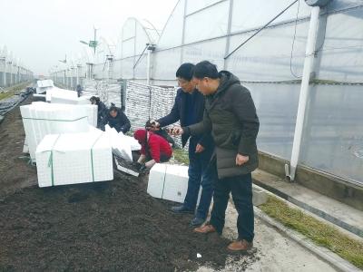 烟叶育种专家指导检查基质含水量