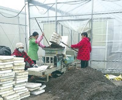优质基质装进烟叶育苗播种机