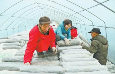 汝阳党建发展壮大集体经济