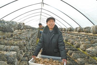 贫困户种植香菇变身致富能人