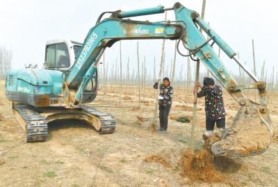 ?#23616;?#26641;造林绿化中原】兰考掀起植树热