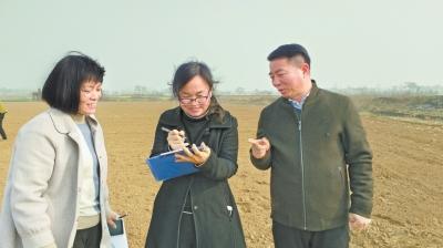 省农业科学院开展土壤样品采集