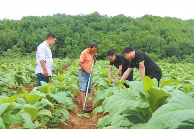 科技种烟促进烟农增收