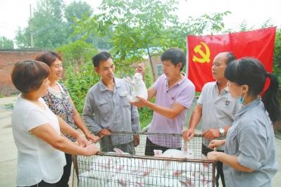 發揮先鋒模范帶領村民發展肉兔養殖