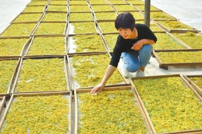 濮陽縣八公橋鎮發展特色高效農業產業